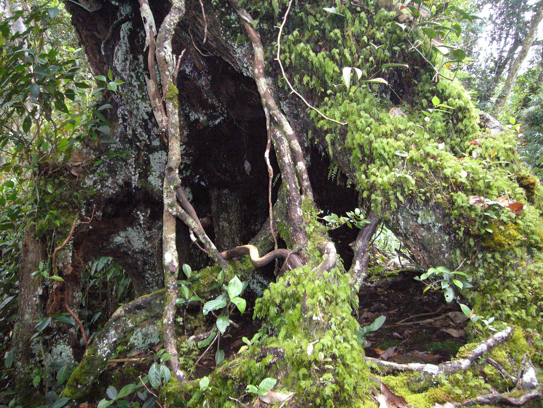 ジャングルトレッキング In Malaysia: 自然のシャワーを浴びながら